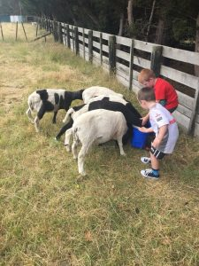 Feeding sheep has become a reality for Braxton, 4, and Ryan, 6, after moving with their parents to rural Masterton last year. PHOTO/SUPPLIED