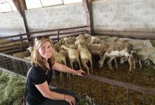 Lucy Griffiths travelled the world as a Nuffield New Zealand scholar and visited a sheep farm in France that was a supplier of Roquefort cheese. PHOTO/SUPPLED