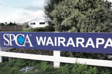 SPCA centre could reopen