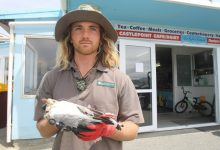 Department of Conservation ranger Keith Townsend holds a lifeless seagull, tangled in fishing line. PHOTO/EMILY NORMAN