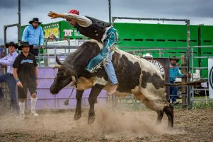 The bullride event in Martinborough on January 5. NOTE: This is not the bull that was injured. PHOTO/JADE CVETKOV