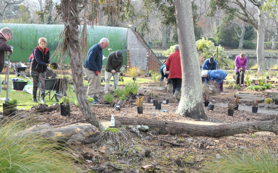 PHOTOS: Volunteers pitch in for planting