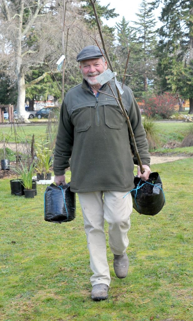 Paul Foster arrives with two Cornus trees.