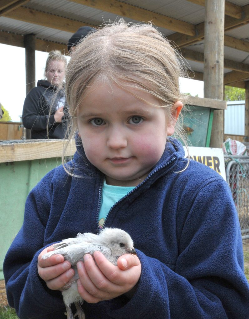 5-year-old Samantha Rodgers, of Lower Hutt, is the proud new owner of a chick.  PHOTO/CHRIS KILFORD