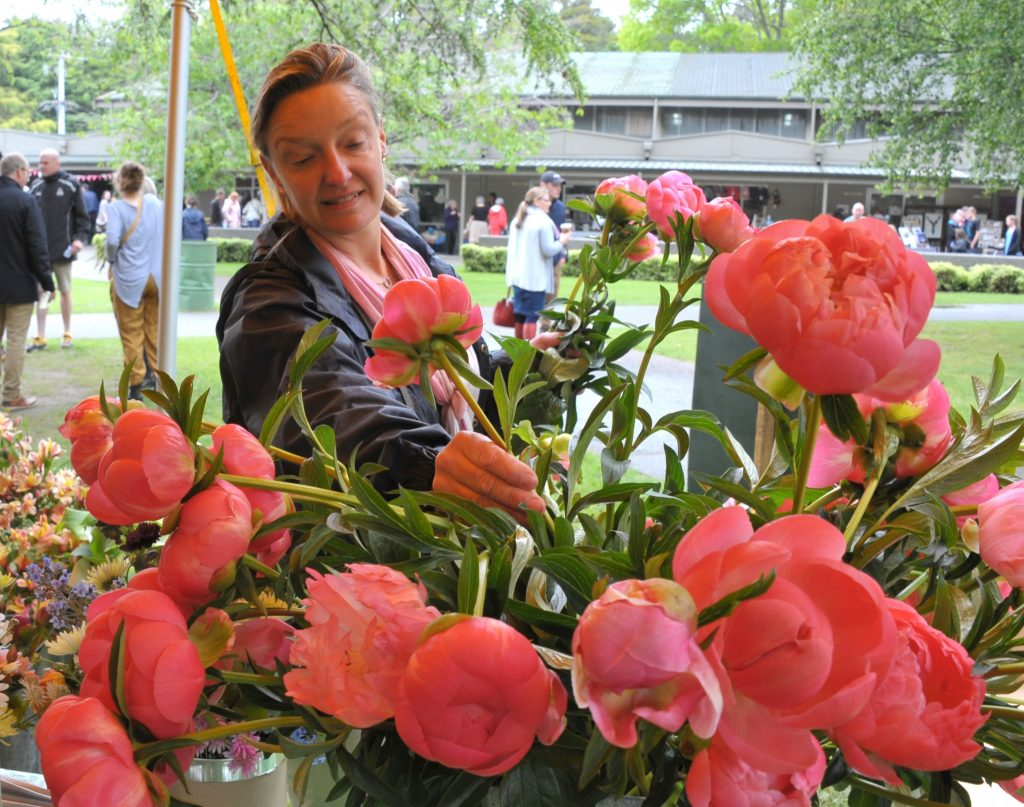 Mel Williams (Masterton) picks a bunch of peonies. PHOTO/CHRIS KILFORD