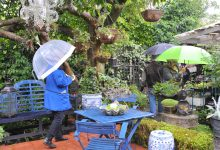 "Wairarapa Garden Tour, Greytown, Saturday, umbrellas were a ""must"".... PHOTO/CHRIS KILFORD"