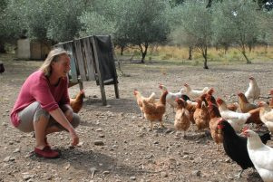 Josje Neerincx hopes the Community Owned Chicken (COC) project will continue to grow. PHOTO/BECKIE WILSON