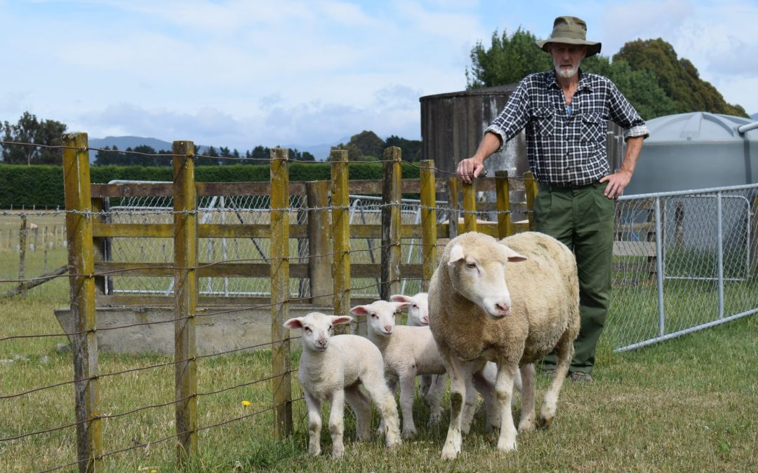 Ewe must be joking – five lambs