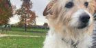 Burglary and dog theft 'pure evil'