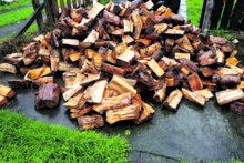 Wet firewood a  burning issue