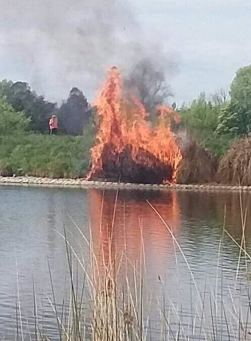 Duck burnt in fire at Henley Lake