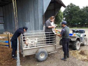 Jo Stammers at work on the farm. PHOTO/SUPPLIED