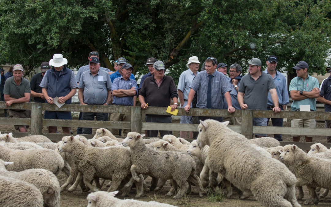 On-farm lamb sale well-received - Times Age