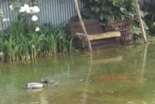 Sewage spill 'disgusts'