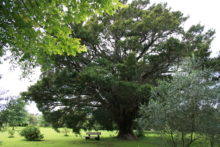 Protecting south's best trees