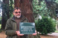 Sequoiadendron Giganteum demystified