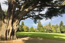 Park trees have a rich history