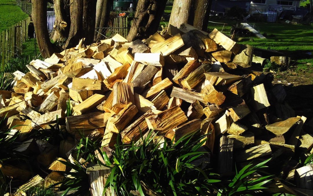 Mystery donor gifts dry firewood to families