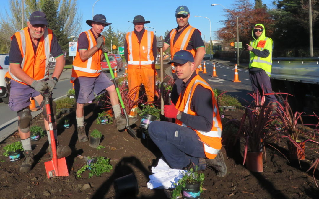 Roundabout planting team work with real urgency