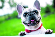 Doggone it … registration fees to rise