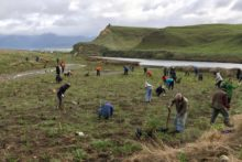 Coastal planting day taking root