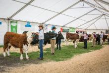Hoof and Hook pulls in 'farmers'