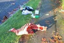 Fly-tipping angers councillor