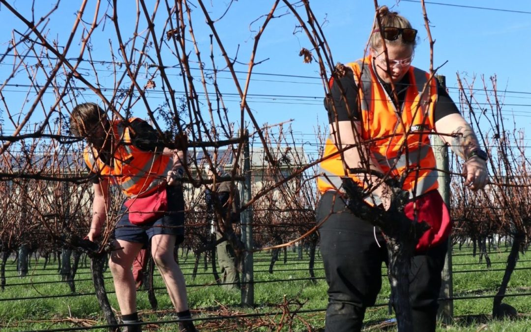 Young stars in the vines