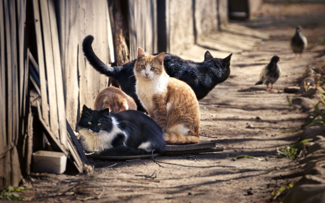 No nine lives for region's feral cats