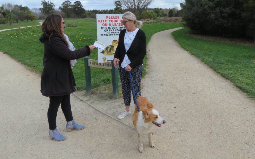 Confusion over dogs rights at lake affects nesting birds