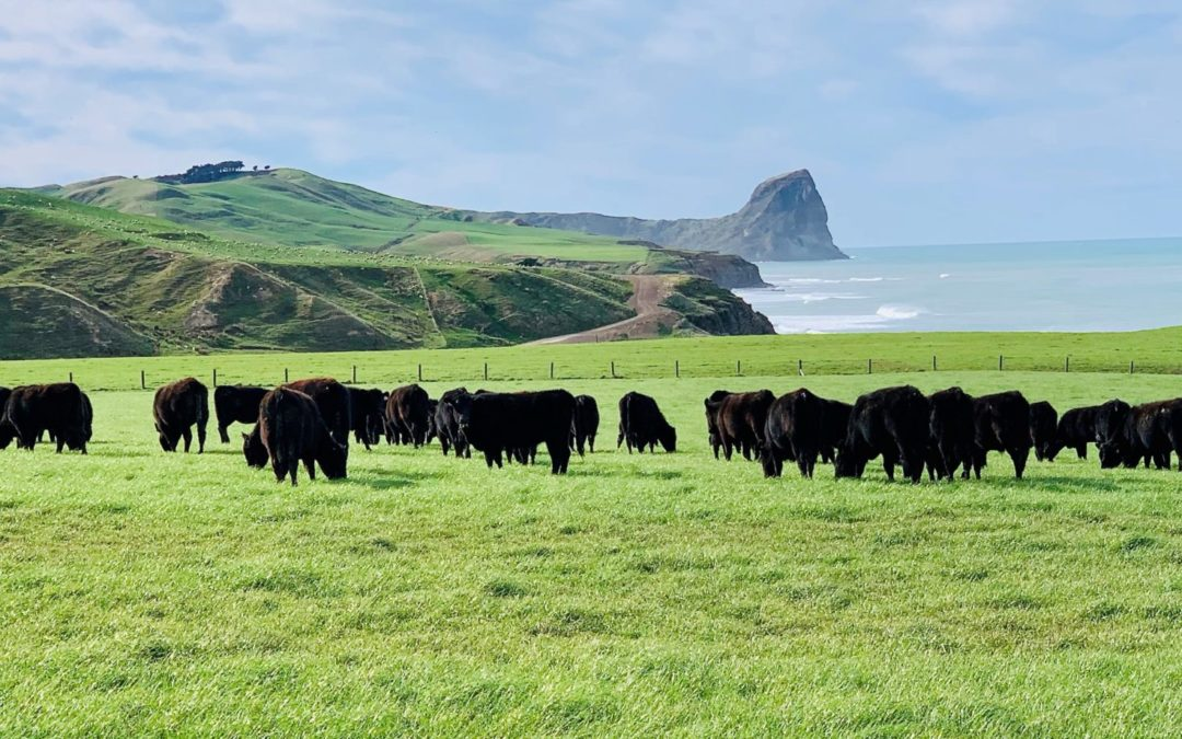 Wagyu all the way at Castlepoint