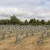 Buried but not forgotten