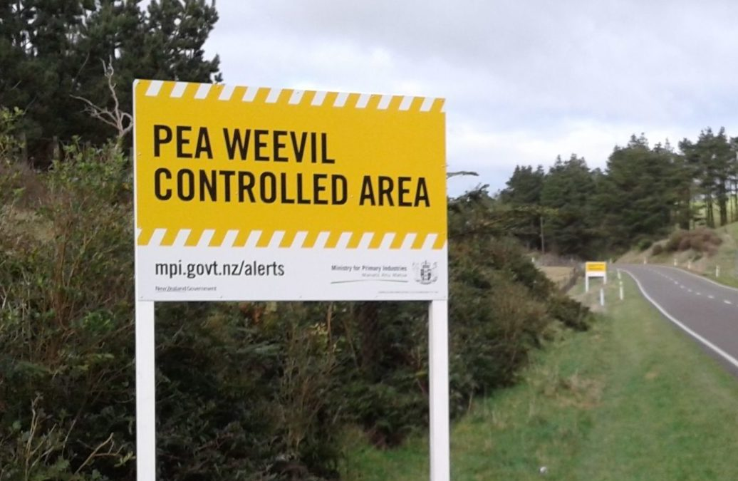 Pea ban lifted after four long years