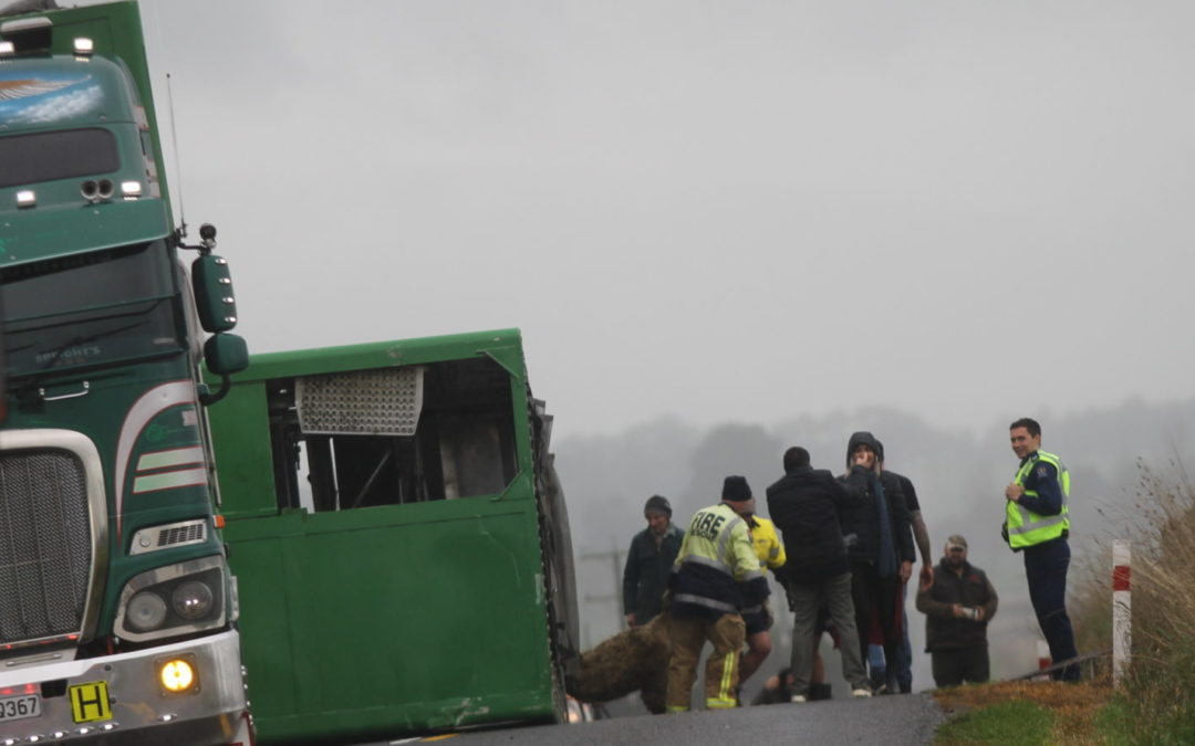 Sheep killed in truck roll