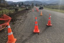 Trees to be planted on road