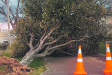 Strong winds wreak havoc in town
