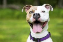 Dog registrations set to climb